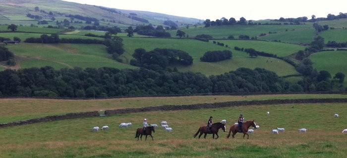 700x320-horse-riding
